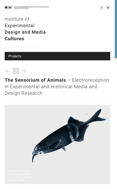 Sensorium of Animals